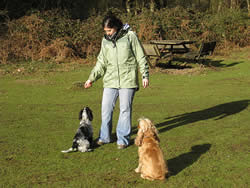 Cheryl walking her dogs through the countryside