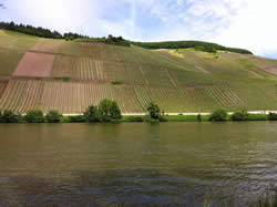 Vineyards and The Mosel